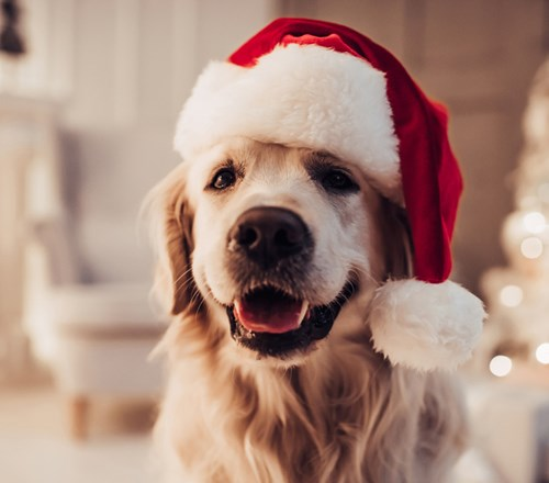 Dog Labrador Xmas Hat