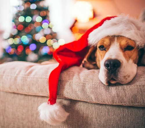 Dog Beagle Xmas Santa Hat