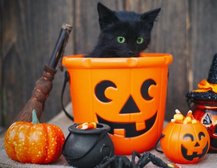 Cat Black Halloween